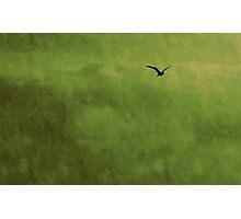 L'oiseau Photographic Print