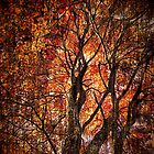 Autumn Aura by debidabble