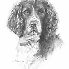 english springer spaniel drawing by Mike Theuer