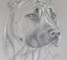 American Staffordshire Terrier by BarbBarcikKeith