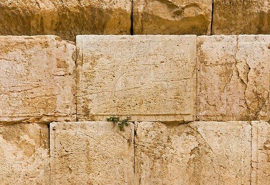 Inscription by dominiquelandau