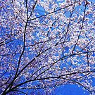 Spring around the corner ! by Nancy Richard