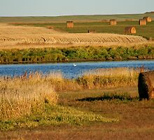 October In Saskatchewan by Vickie Emms