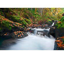 Autumn Treasure Photographic Print