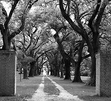 Southern Driveway by Jonicool
