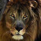 LIONS EYE by Dennis Stewart