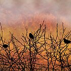 Blackbirds by Sabine Spiesser