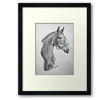 """""""Argentinian Beauty"""" - Criollo mare Framed Print"""