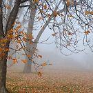 Misty Morning 1 by Johanne Brunet