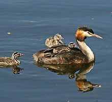 Family Outing by Robert Abraham