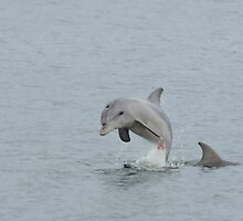 Leaping Dolphin by Aussiebluey