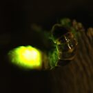 glowworm by mtths