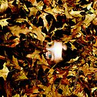 Gilded by Lauren Andalora