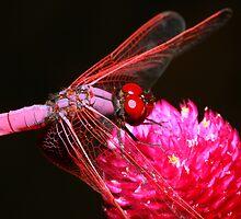 Dragon Fly by Christophe Testi