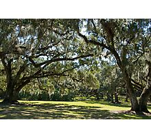 Oaks of Avery Island Photographic Print