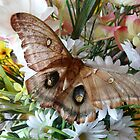 Butterfly Kisses Flowers by MaeBelle