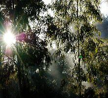 Smoking Sunshine by Baxter Lindeman