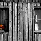 Flowers in the Window by KDPhotos