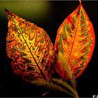 leaves by vpiombo