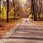 Autumn forest road by Tymlaird