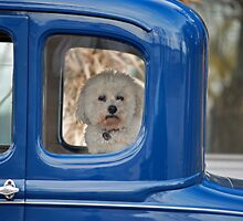 How Much Is The Doggie In The Window? by Maria Dryfhout