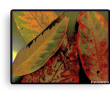 flawed but beautiful Canvas Print