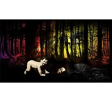 Babes in Wood Photographic Print