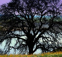 *VALLEY BLACK OAK* by davesdigis