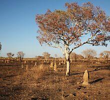 Dry Kimberley Plains by jamesmason