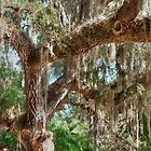 Among the Spanish Moss by John  Kapusta