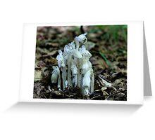 White Indian Pipe Mushrooms Greeting Card