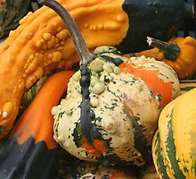 Fancy Gourds Up Close by SmilinEyes