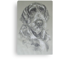 German Wire-haired Pointer Canvas Print