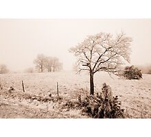 Ice Storm Photographic Print