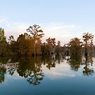 Cypress Reflections by Bonnie T.  Barry