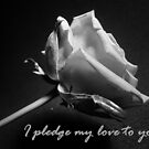 Pledge by Kimberley  x  Davitt