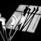 Shadows of PEACE by Terri~Lynn Bealle