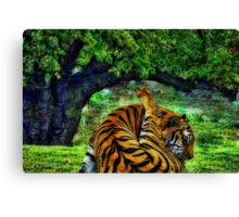 Cat Wash Canvas Print