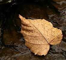 A Fallen Leaf by BigD