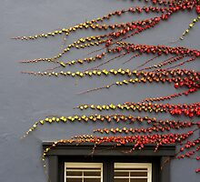 Surry Hills Window by jagphoto