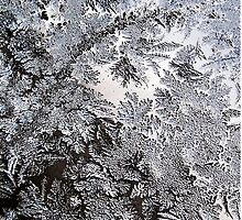 Frosty Glass Abstract by Christina Rollo