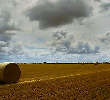 Hay by Darren Wright