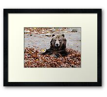 Brown Bear in leaves Framed Print