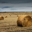 Harvest Time. by Ryan Carter