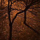 Evening glow by Purplecactus