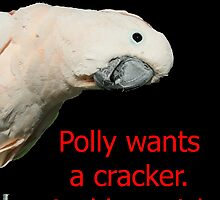 Polly wants a cracker! by Sarah Grace