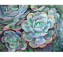 Succulents II Photographic Print