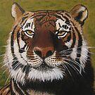 Bengal Tiger by NatMason