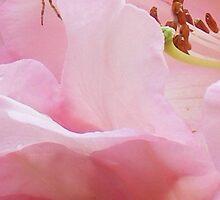 spider on rhododendron flower by gaylene