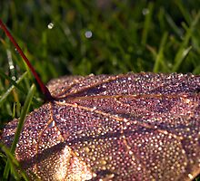 Morning Dew by Kathy Weaver